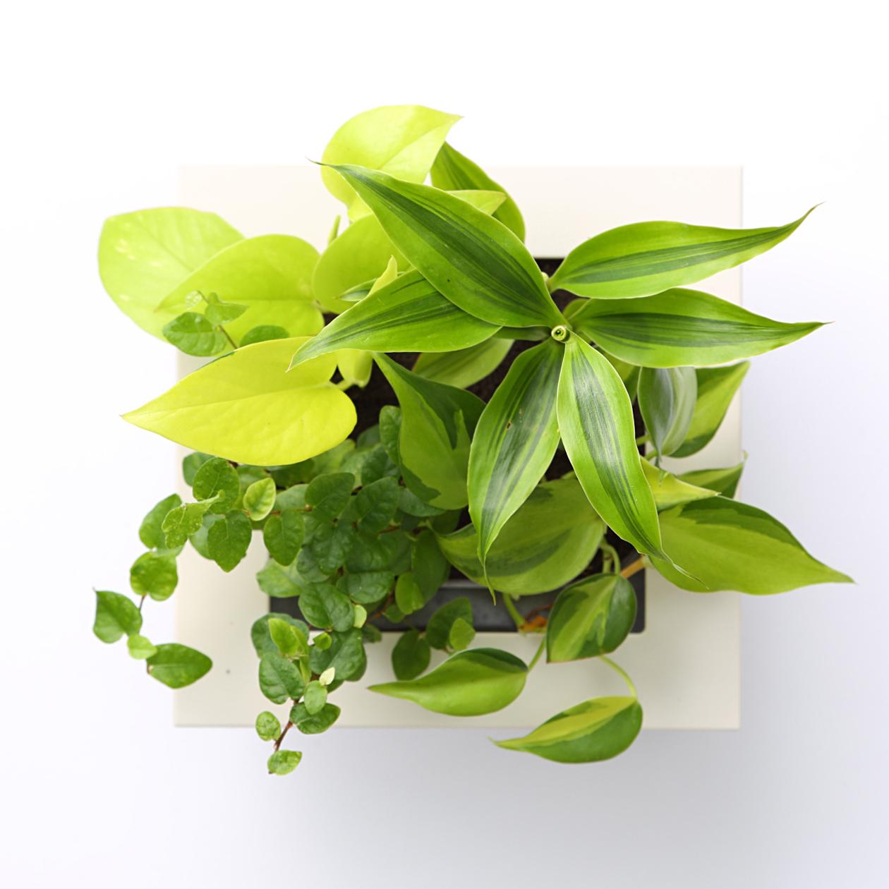 無印良品の壁にかけられる観葉植物のカンタン植え替え