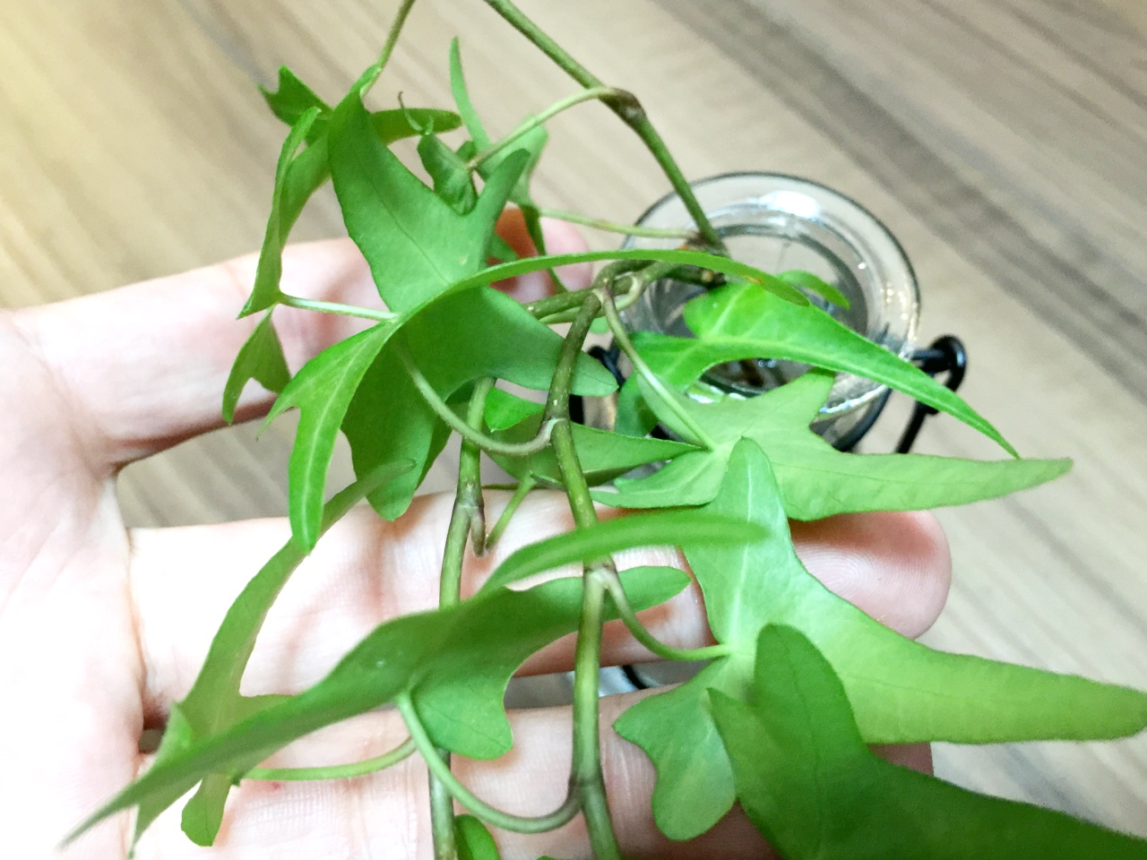 無印良品の壁にかけられる観葉植物のカンタン植え替え方法
