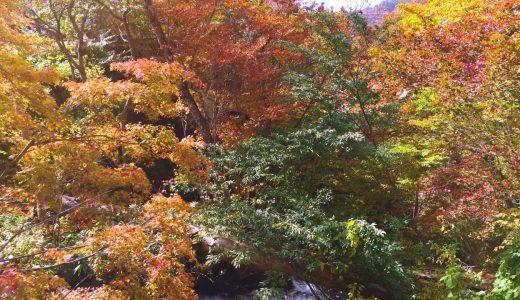 紅葉の美しさ全開!平家ゆかりの地、日光を旅してきました